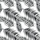 Άνευ ραφής σχέδιο φύλλων φοινικών χρώματος Επίπεδο ύφος μαύρο λευκό ελεύθερη απεικόνιση δικαιώματος