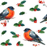 Άνευ ραφής σχέδιο Χριστουγέννων Watercolor με το κόκκινο χειμερινό πουλί bullfinch Στοκ Φωτογραφίες