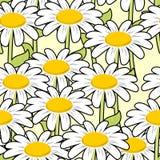 Άνευ ραφής σχέδιο Chamomile Όμορφη διακόσμηση λουλουδιών Στοκ φωτογραφία με δικαίωμα ελεύθερης χρήσης