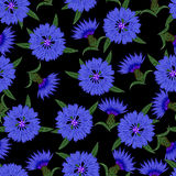 Άνευ ραφής σχέδιο, cornflowers σε ένα μαύρο υπόβαθρο Στοκ Φωτογραφίες