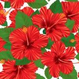 Άνευ ραφής σχέδιο hibiscus ελεύθερη απεικόνιση δικαιώματος