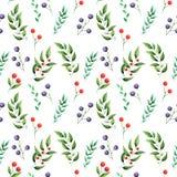 Άνευ ραφής σχέδιο watercolor με τα πράσινα φύλλα και τα μούρα που απομονώνονται στο άσπρο υπόβαθρο Στοκ Φωτογραφία