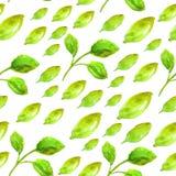 Άνευ ραφής σχέδιο Watercolor με το πράσινο φύλλο Στοκ Εικόνα