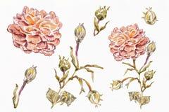 Άνευ ραφής σχέδιο Watercolor Στοκ Εικόνες