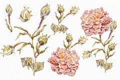 Άνευ ραφής σχέδιο Watercolor Στοκ Φωτογραφίες