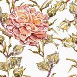Άνευ ραφής σχέδιο Watercolor Στοκ εικόνες με δικαίωμα ελεύθερης χρήσης
