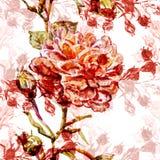 Άνευ ραφής σχέδιο Watercolor Στοκ Εικόνα