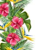 Άνευ ραφής σύνορα με τα τροπικά φύλλα και τα λουλούδια Κλάδοι φοινικών, λουλούδι πουλιών του παραδείσου, hibiscus διανυσματική απεικόνιση
