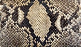 Άνευ ραφής σύσταση δερμάτων φιδιών Μόδα για τα τροπικά ερπετά Γνήσιο δέρμα Python στοκ φωτογραφία με δικαίωμα ελεύθερης χρήσης