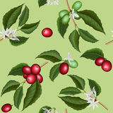 Άνευ ραφής σύσταση λουλουδιών και μούρων δέντρων καφέ διανυσματική απεικόνιση