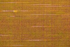 Άνευ ραφής σύσταση ταπετσαριών μεταξιού Στοκ Φωτογραφία