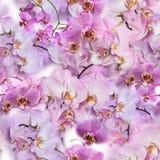 Άνευ ραφής σύσταση των λουλουδιών ορχιδεών Phalaenopsis Στοκ εικόνες με δικαίωμα ελεύθερης χρήσης