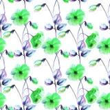 Άνευ ραφής ταπετσαρία με τα ζωηρόχρωμα λουλούδια παπαρουνών Στοκ Εικόνα