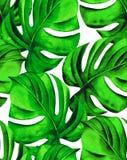 Άνευ ραφής τροπικά φύλλα Στοκ Εικόνα