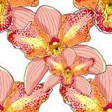 Άνευ ραφής τροπικό λουλούδι διανυσματικό IL Cymbidium ορχιδεών σχεδίων ρόδινο ελεύθερη απεικόνιση δικαιώματος