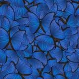Άνευ ραφής υπόβαθρο από το μπλε morpho Στοκ Εικόνες
