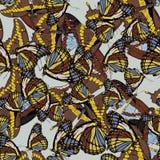 Άνευ ραφής υπόβαθρο με ένα σχέδιο των πεταλούδων Aglais io, Parnassius απόλλωνας, atropos Acherontia, Papilio machaon απεικόνιση αποθεμάτων