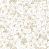 Άνευ ραφής υπόβαθρο με τα άσπρα λουλούδια. Διάνυσμα άρρωστο Στοκ εικόνες με δικαίωμα ελεύθερης χρήσης