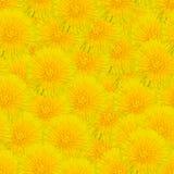 Άνευ ραφής υπόβαθρο με τις κίτρινες πικραλίδες Στοκ Εικόνες