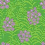 Άνευ ραφής υπόβαθρο με verbena τα λουλούδια Στοκ εικόνα με δικαίωμα ελεύθερης χρήσης