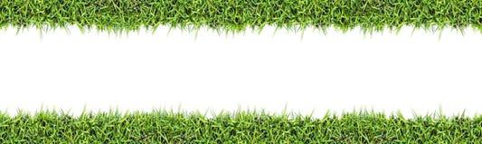 Άνευ ραφής υπόβαθρο χλόης που απομονώνεται στο λευκό Στοκ φωτογραφία με δικαίωμα ελεύθερης χρήσης