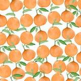 Άνευ ραφής υπόβαθρο watercolor με τα πορτοκάλια και tangerines, χέρι απεικόνιση αποθεμάτων