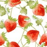 άνευ ραφής φράουλα προτύπ&omega Συρμένη χέρι απεικόνιση των μούρων στο άσπρο υπόβαθρο Στοκ Εικόνα
