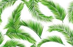 Άνευ ραφής φύλλα καρύδων Στοκ Φωτογραφίες