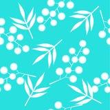 Άνευ ραφής φύλλα και κλάδοι ενός mimosa Στοκ Εικόνες