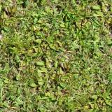 Άνευ ραφής χλόη Φρέσκο πράσινο υπόβαθρο σύστασης κήπων πατωμάτων βρύου χλόης Στοκ Φωτογραφία