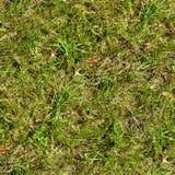 Άνευ ραφής χλόη Φρέσκο πράσινο υπόβαθρο σύστασης κήπων πατωμάτων βρύου χλόης Στοκ εικόνες με δικαίωμα ελεύθερης χρήσης