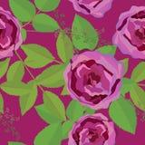 Άνευ ραφής floral σχέδιο με τα ρόδινα τριαντάφυλλα απεικόνιση αποθεμάτων