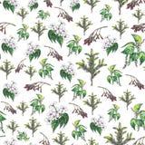 Άνευ ραφής floral σχέδιο στο άσπρο υπόβαθρο ελεύθερη απεικόνιση δικαιώματος