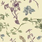 Άνευ ραφής floral σχέδιο με peppermint τα κλαδάκια Απεικόνιση αποθεμάτων