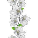 Άνευ ραφής floral υπόβαθρο χέρι-σχεδίων με τα amaryllis λουλουδιών Στοκ Εικόνες