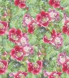 Άνευ ραφής Floral υπόβαθρο Watercolor Στοκ Φωτογραφίες