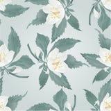 Άνευ ραφής jasmine σύστασης και άνοιξη οφθαλμών διάνυσμα λουλουδιών Στοκ Φωτογραφίες
