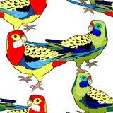 Άνευ ραφής roseella παπαγάλων τροπικών κύκλων σχεδίων εξωτικό Διανυσματικό illustra Στοκ εικόνες με δικαίωμα ελεύθερης χρήσης