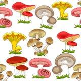 Άνευ ραφής russula μανιταριών σχεδίων, chanterelle, champignon, GR απεικόνιση αποθεμάτων