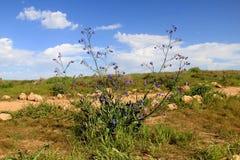 Άνθηση άνοιξη των κόκκινων λουλουδιών anemones Στοκ φωτογραφία με δικαίωμα ελεύθερης χρήσης