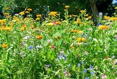 Άνθηση flowerbeds στοκ φωτογραφίες με δικαίωμα ελεύθερης χρήσης