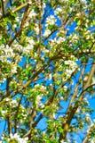 Άνθη άνοιξη και κυανός ουρανός Στοκ εικόνα με δικαίωμα ελεύθερης χρήσης