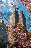 Άνθη άνοιξη με το αστικό υπόβαθρο στοκ φωτογραφία με δικαίωμα ελεύθερης χρήσης