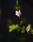 Άνθη άνοιξη στοκ εικόνα με δικαίωμα ελεύθερης χρήσης