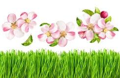 Άνθη δέντρων της Apple και φρέσκια πράσινη χλόη Αντικείμενα φύσης άνοιξη Στοκ Εικόνα