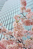 άνθη αστικά Στοκ Εικόνα