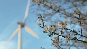 Άνθη δέντρων της Apple την άνοιξη με τον ανεμοστρόβιλο στο υπόβαθρο απόθεμα βίντεο