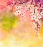 Άνθη κερασιών ζωγραφικής Watercolor Στοκ Εικόνες
