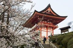 Άνθη κερασιών, Κιότο, Ιαπωνία στοκ φωτογραφίες