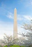 Άνθη κερασιών στο μνημείο της Ουάσιγκτον στο συνεχές ρεύμα στοκ φωτογραφία